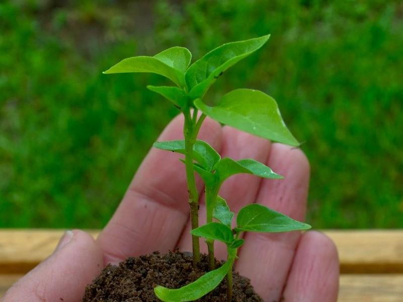 L'orto di Claire: innovazione sociale e agricoltura sostenibile a San Giorgio di Piano